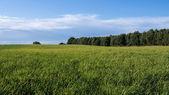 Krajobraz w lecie — Zdjęcie stockowe