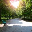 Stock Photo: Tiergarten berlin in summer