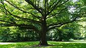 Tree in berlin tiergarten — Stock Photo