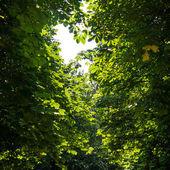 листья дерева — Стоковое фото