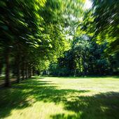 парк летом (размыты) — Стоковое фото
