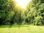 Tiergarten berlin — Stock Photo
