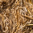 Stock Photo: Straw bale texture