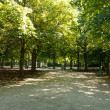 Stock Photo: Tiergarten berlin