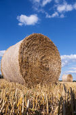 Straw bales in summer — Stock Photo