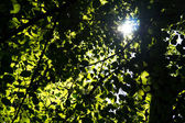 Leaves of a tree — Stock Photo