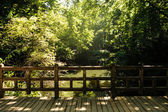 Lake and a bridge in park (tiergarten) — Stock Photo