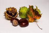 Chestnut and autumn leaf — Stock Photo