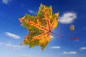 Flying leaf in autumn — Stock Photo