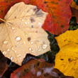 Autumn leaves with raindrops. — Stock Photo