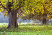 Early autumn tree — Stock Photo