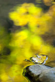 Yellow leaf, autumn colors in mountain stream — Stock Photo