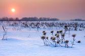 Thistle covered with snow and sunrise. — Stock Photo