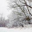 Winter landscape of frosted tree on a foggy morning. — Stock Photo #38905465