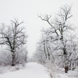 Winter landscape of frosted tree on a foggy morning. — Stock Photo #38905481