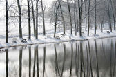 Paisagem do inverno com reflexão - fotografia — Foto Stock