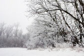 Winter landscape of frosted tree on a foggy morning. — Stock Photo