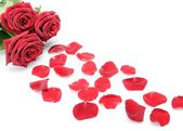 Red roses and scattered flower petals on a white background still life — Stock Photo