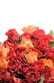 Beautiful flowers of red and orange roses — Stock Photo