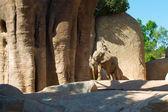 Kochający słoń — Zdjęcie stockowe