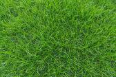 Short grass. — Stock Photo