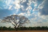 Landscape of dead tree. — Foto Stock