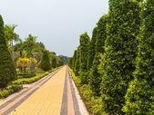 Garden. — Stock Photo