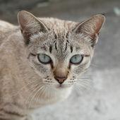 Gato de perto. — Fotografia Stock