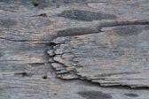 Wood texture. — Stock Photo