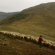 Shepherds in Rila mountains, Bulgaria — Stock Photo