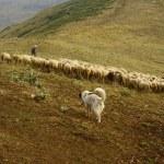 Shepherds in Rila mountains, Bulgaria — Stock Photo