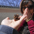 Hand holds pine cone showing to the women — Stock Photo