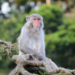 Pensive monkey — Stock Photo