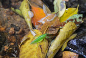 Standing in autumn orange leaves a green insect — Photo