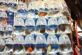 Goldfische zu verkaufen bei einem markt — Stockfoto