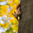 Photo squirrel on a tree — Stock Photo