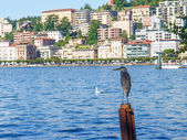 Cormorant — Foto de Stock
