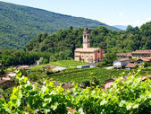 Church of Sessa and vineyards — Stock Photo