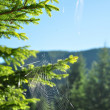 Spiderweb in green forest — Stock Photo #38515555