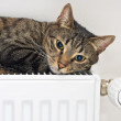 Cat relaxing on  radiator — Stock Photo