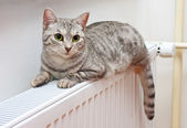 Cat relaxing on a warm radiator — Stock Photo