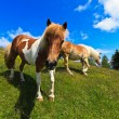 Horse on the mountain pasture — Stock Photo