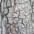 Bark — Stock Photo #41361215