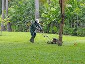 Cutting grass — Stock Photo