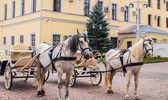 Paard in het kremlin van kazan — Stockfoto