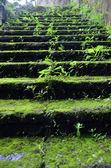 Stone staircase overgrown — Stock Photo