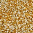 Stock Photo: Corn kernels