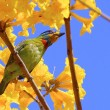 Colorful bird — Stock Photo