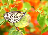 Dotted butterfly — Stock Photo