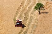 время сбора урожая — Стоковое фото
